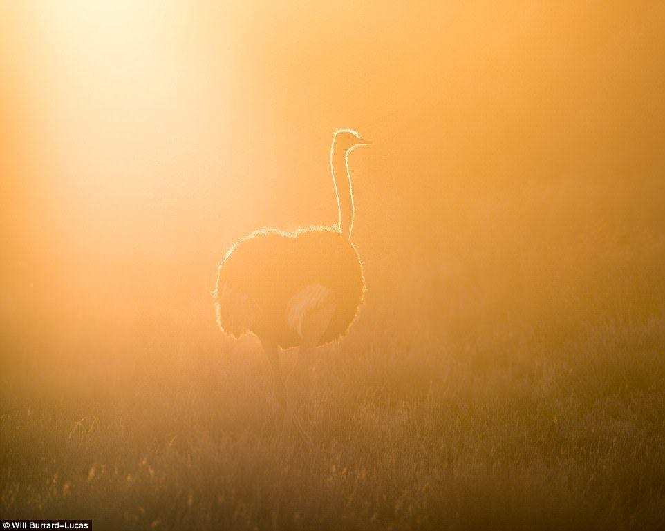 Дикие животные Африки в лучах заката и рассвета