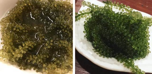 Самая необычная и отвратительная еда в мире