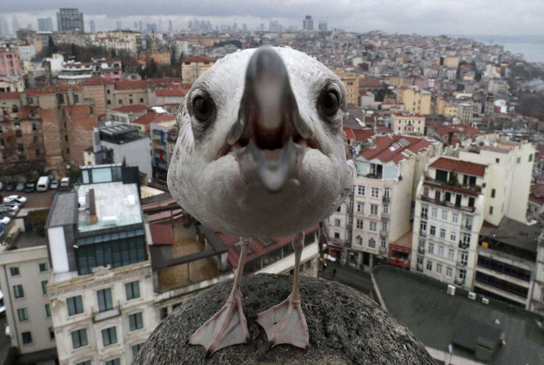 Жизнь животных на фотографиях