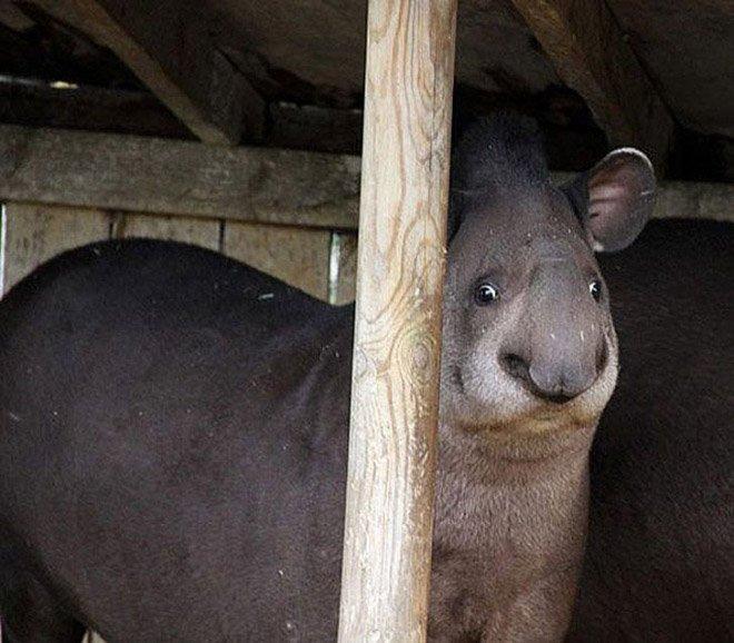 Эти забавные животные нереально удивлены