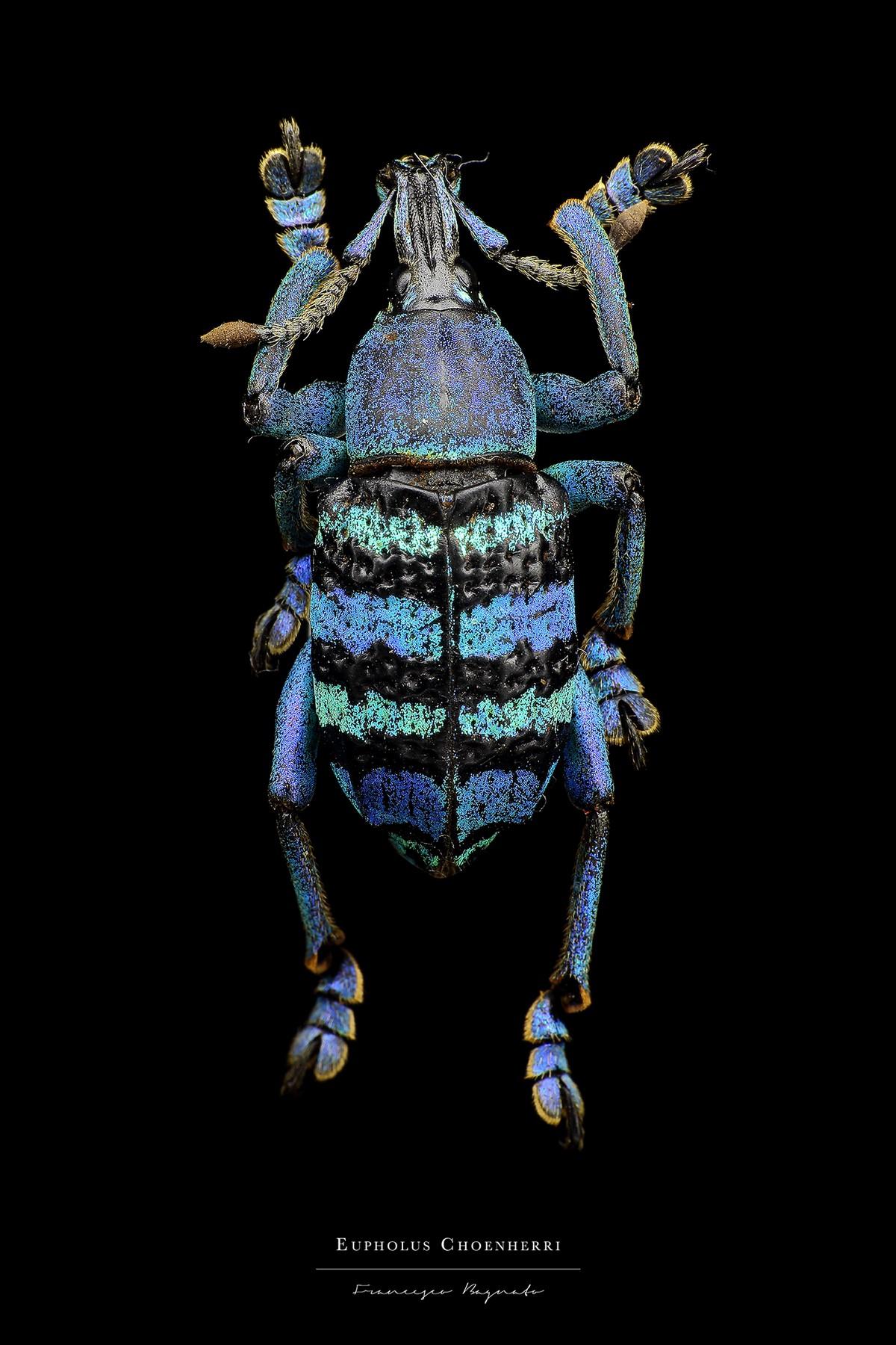 Макро-портреты насекомых от Francesco Bagnato
