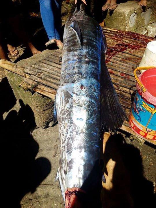На Филиппинах выловили рыбу с замысловатыми татуировками