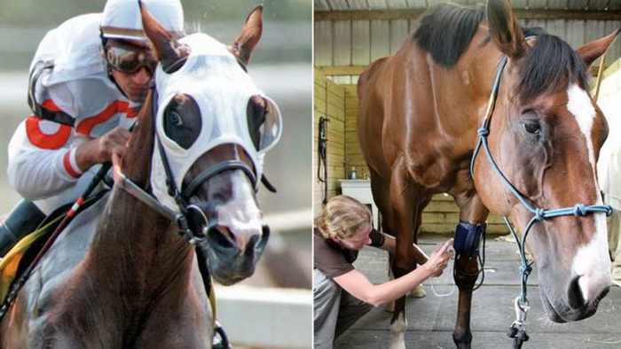 Конь Метро научился рисовать и заработал на свое лечение