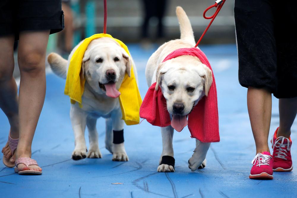 Мини-марафон для собак в Бангкоке