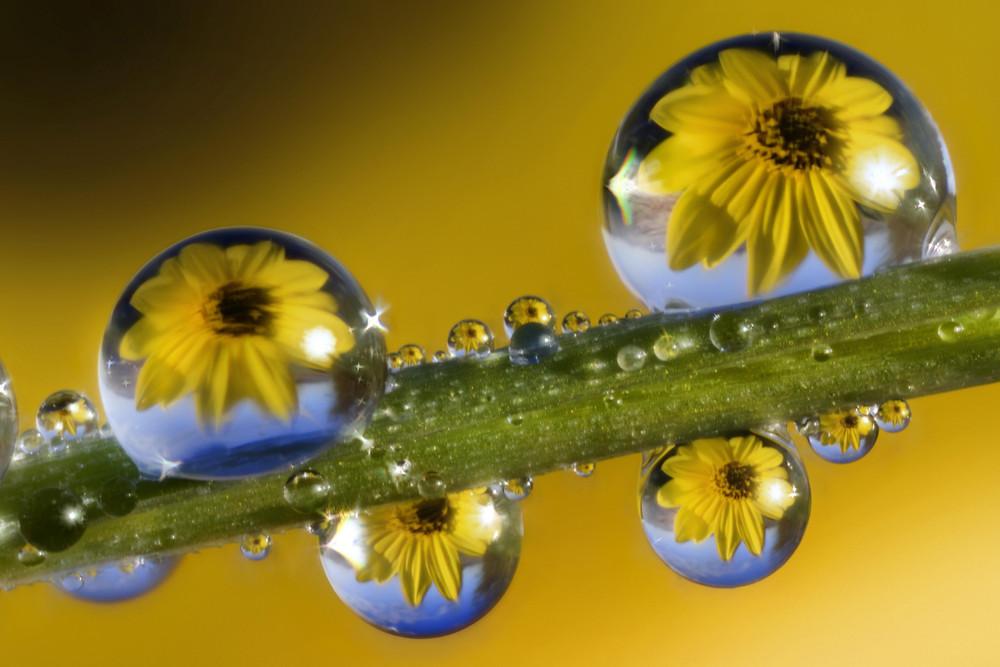 Отражения цветов в капельках росы