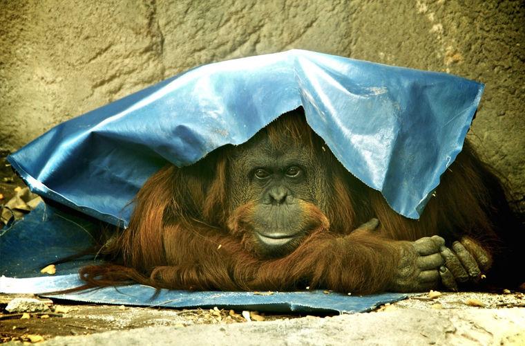 Права животных в разных уголках планеты