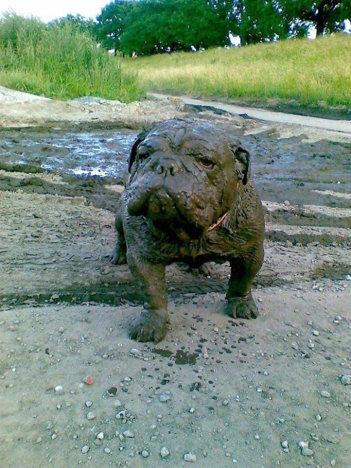 Собакам разрешили поиграть в грязи