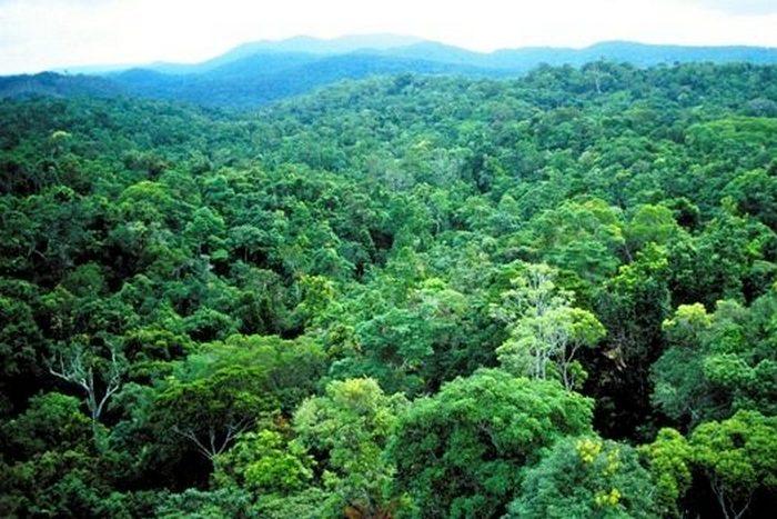 Как изменится Земля, если человечество вымрет