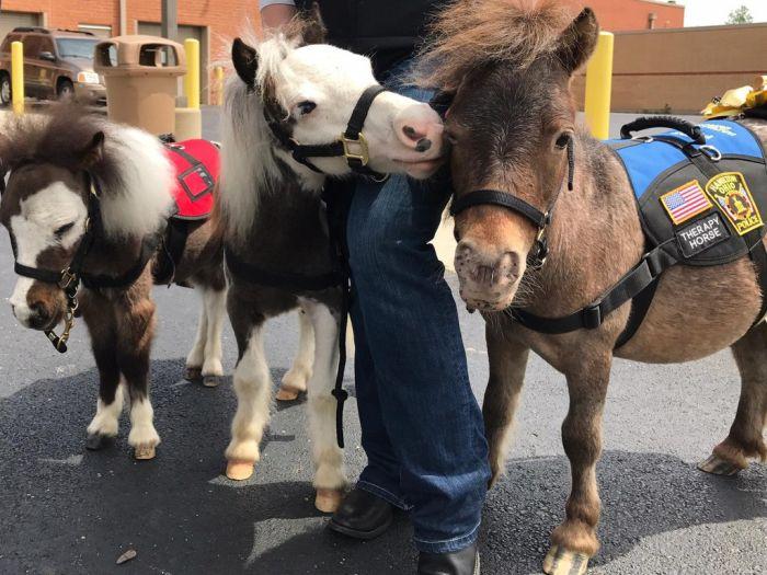 Миниатюрные лошади помогают пассажирам бороться с боязнью перелетов