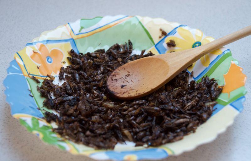 Поклонница здорового образа жизни готовит блюда из насекомых