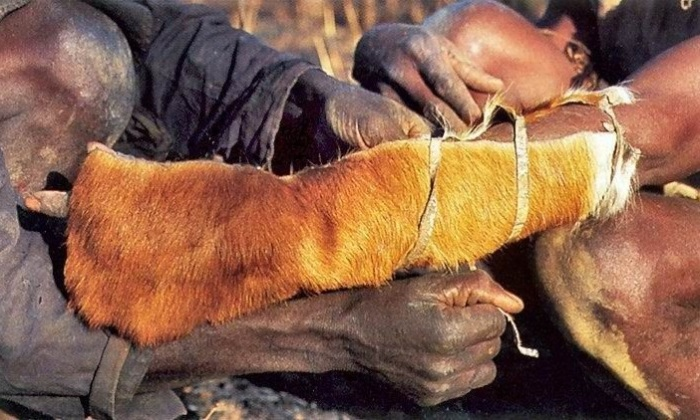 Как в Африке охотятся на питонов