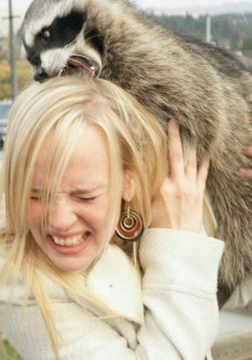 Когда животные против женщин