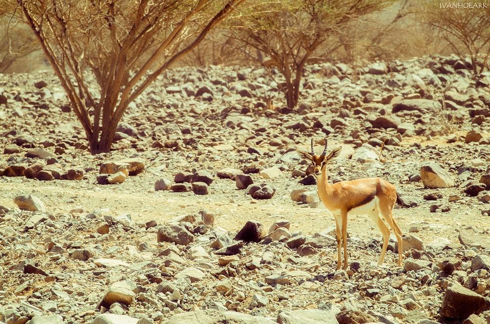 Природа и животные на снимках Ivan Milojevic