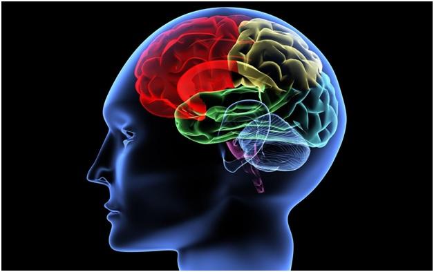 5 способов заставить мозг работать