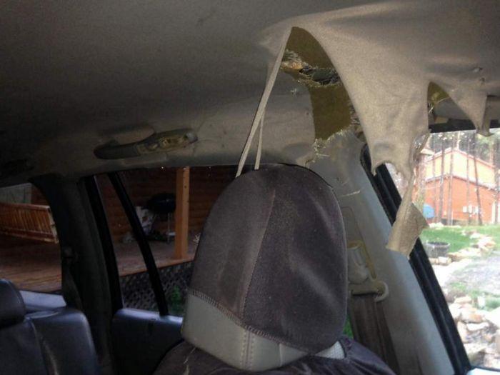 Медведь закрылся в автомобиле: салон требует починки