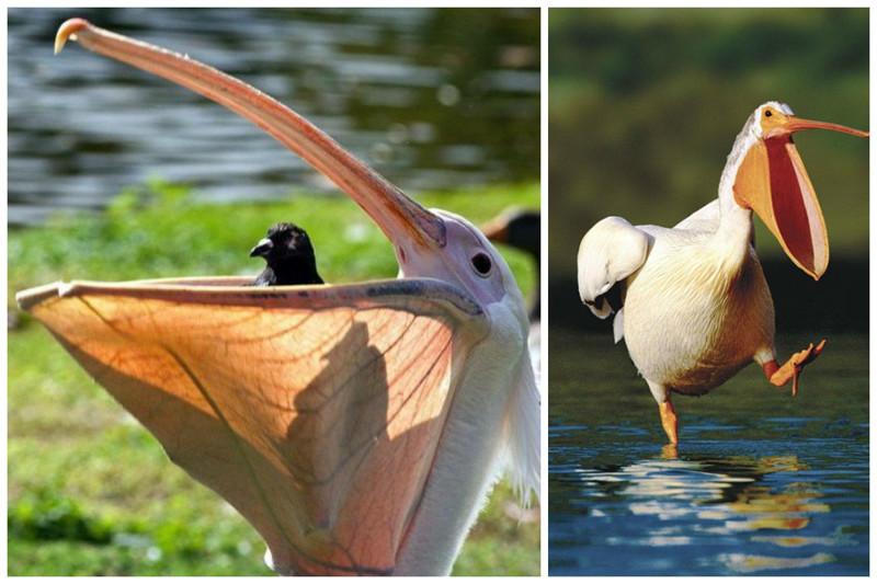 Эти удивительные птичьи клювы