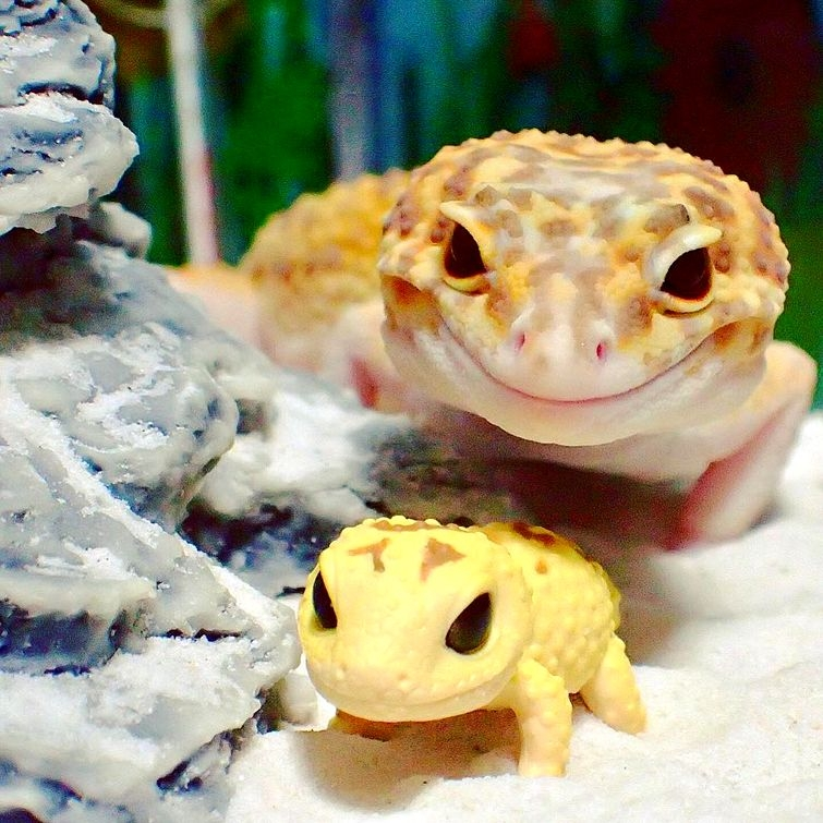Позитивный геккон не может перестать довольно улыбаться