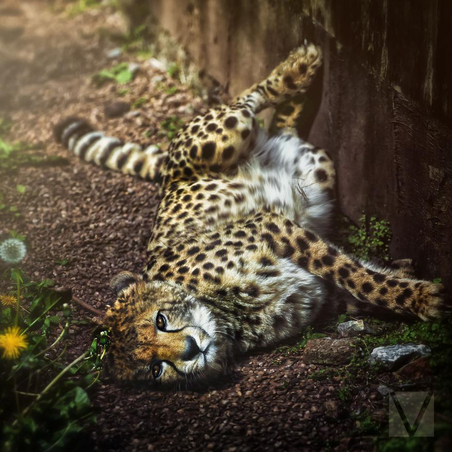 Животные с характером от Вики-Лии Болтер