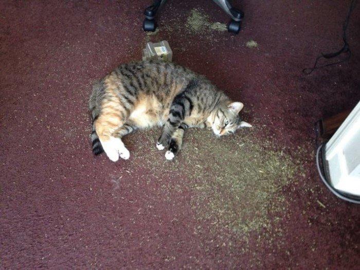 Когда кошки - главные в доме