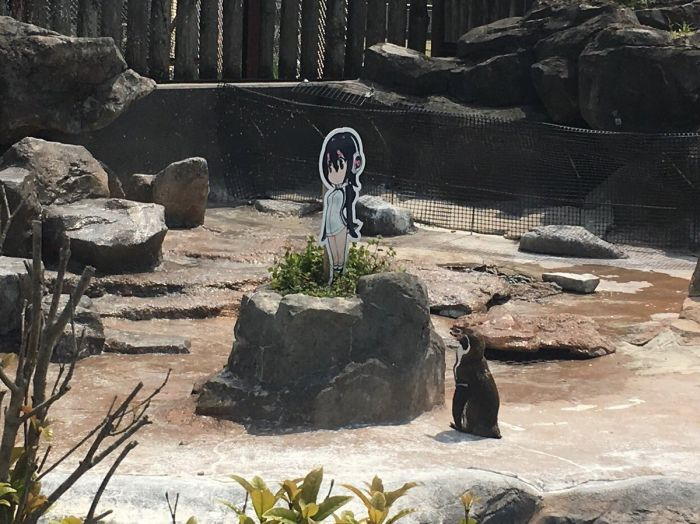 Пингвина Гумбольдта заинтересовала девочка-пингвин Хулулу из аниме