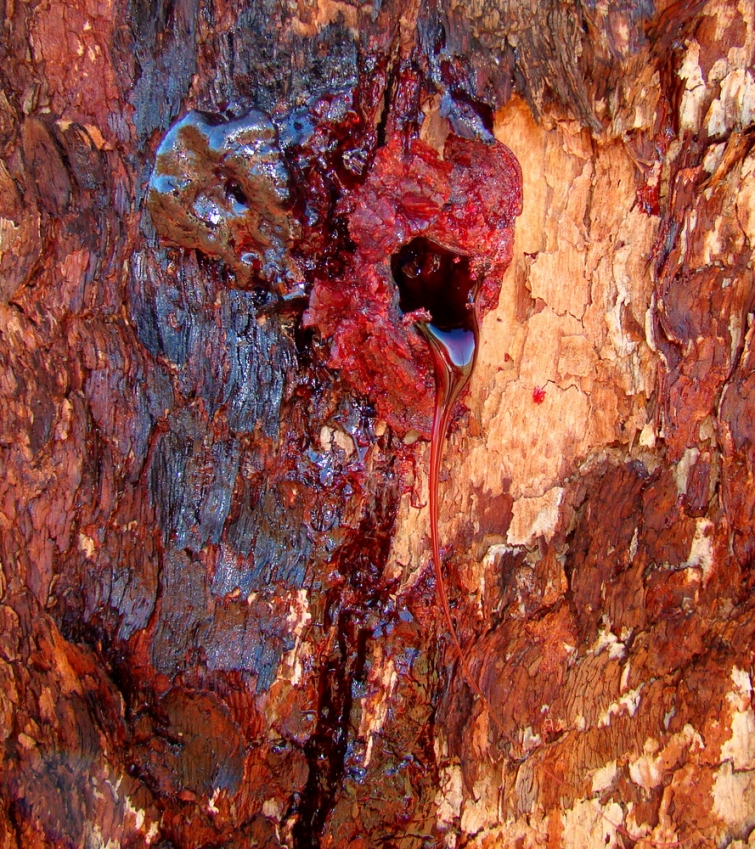 Жутковатое тиковое дерево