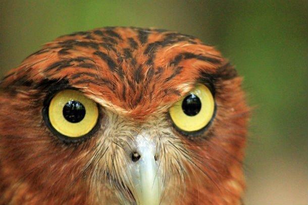 25 самых невероятных фактов про сов