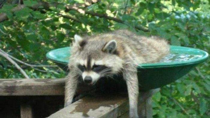 Животные ищут спасения от жары