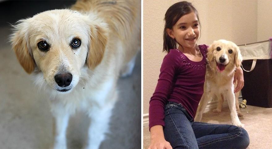 Животные взятые из приюта: до и после