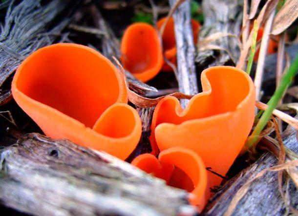 Удивительные виды грибов