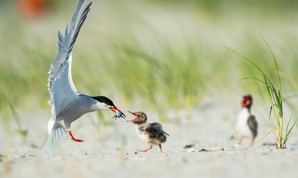 Забавные и интересные птицы