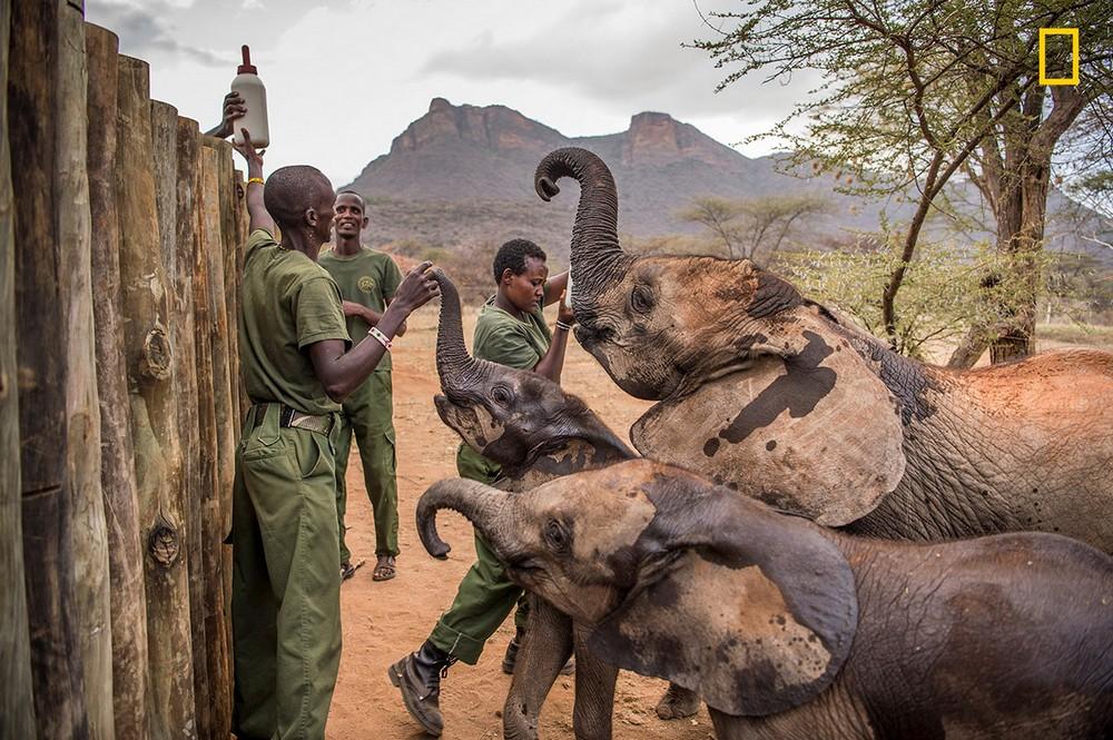 Слоновий приют в северной Кении
