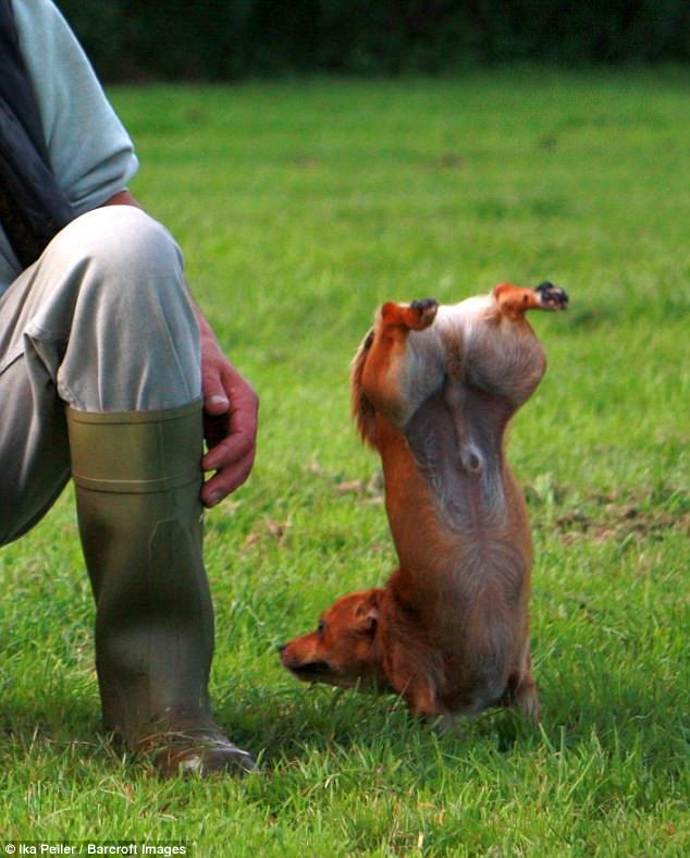 Забавные домашние животные на Comedy Pet Photography Awards