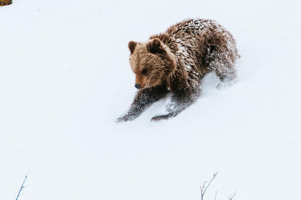 Дикие животные в объективе Ивана Кислова