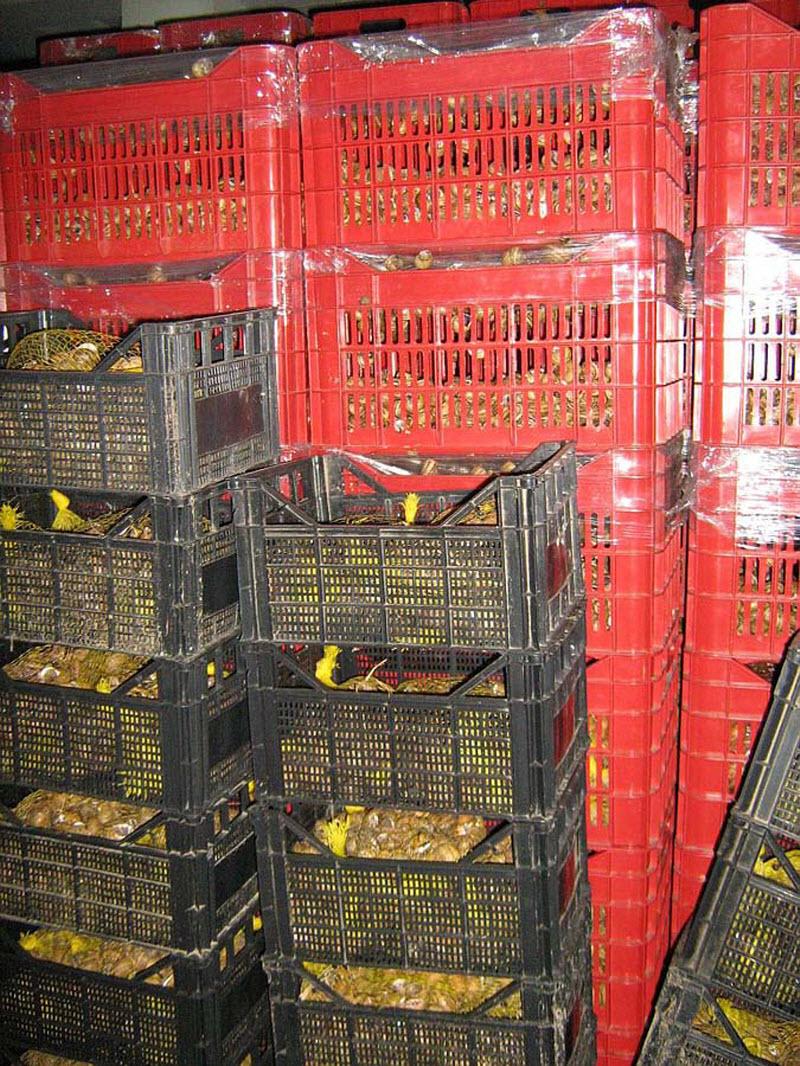 Принципы работы фермы улиток