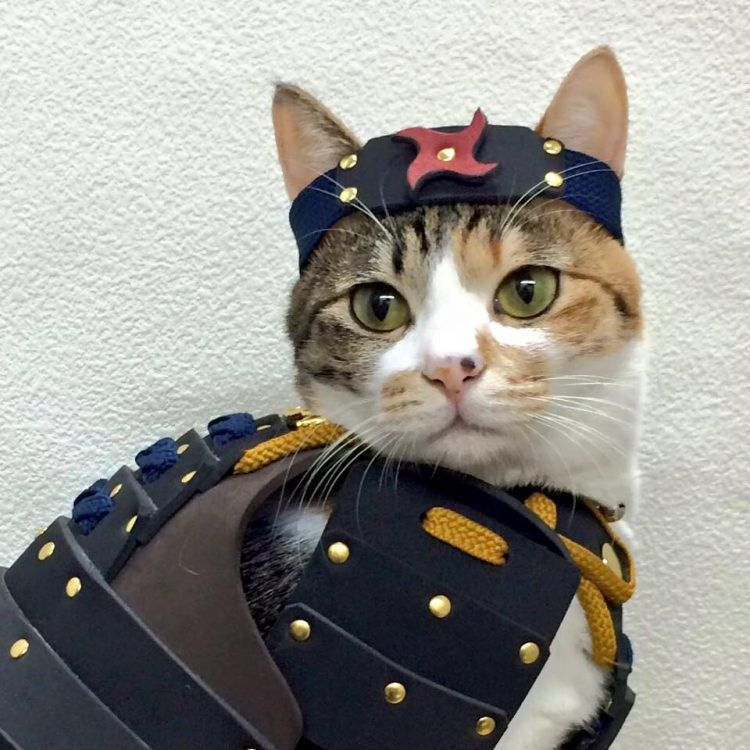 Самурайские доспехи для домашних животных