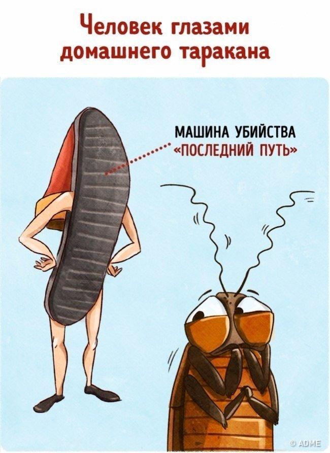 Смешные картинки тапки от тараканов