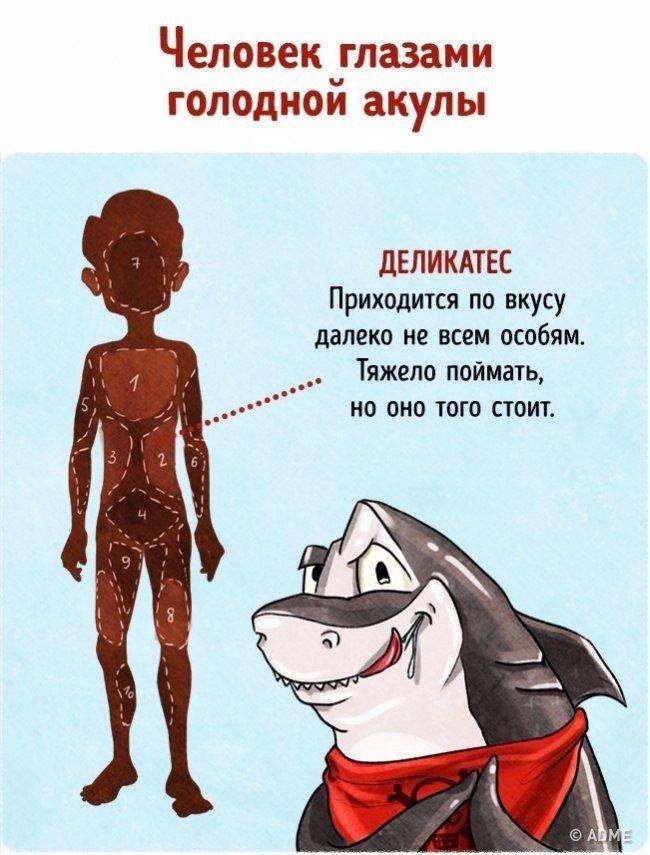 Человек глазами различных животных