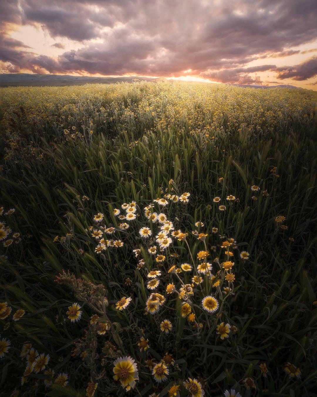 Красивые пейзажи от Джесси Моррисона