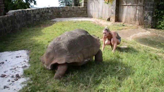 15 животных-гигантов: правда или вымысел