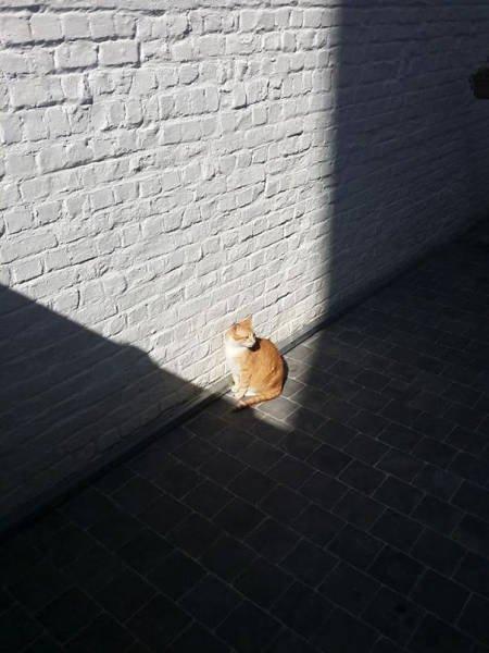 Кошки, которые умеют наслаждаться солнцем