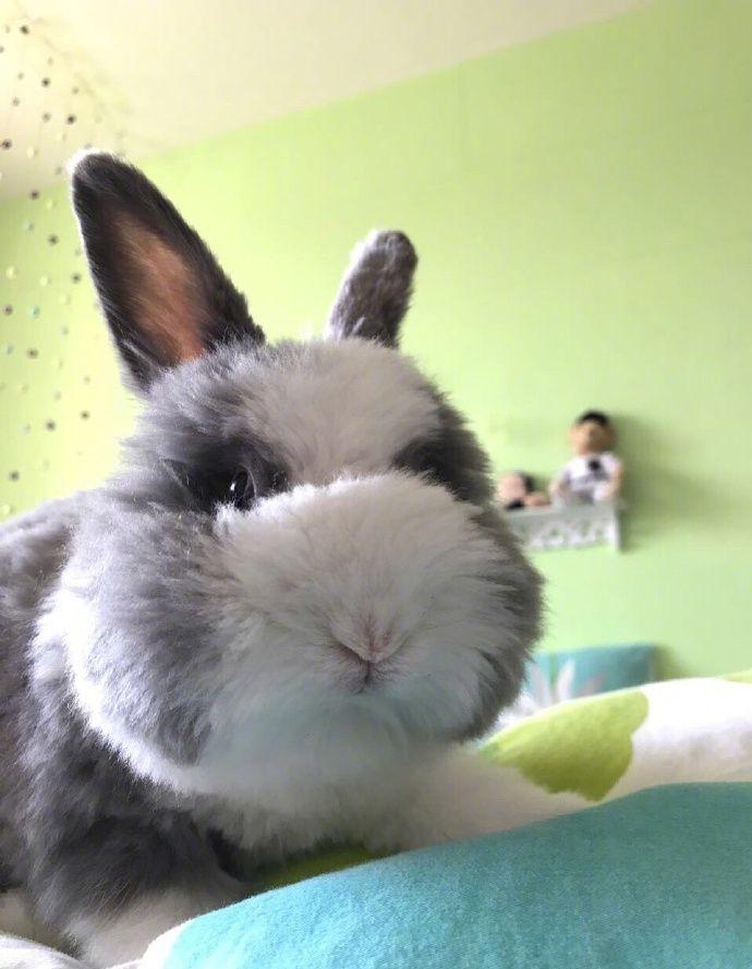 Трудно поверить, что на этих фотографиях настоящий кролик