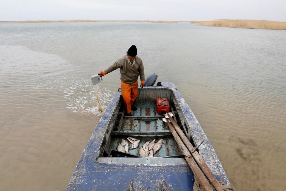 Аральское море: возвращение большой рыбы в небольшой водоём