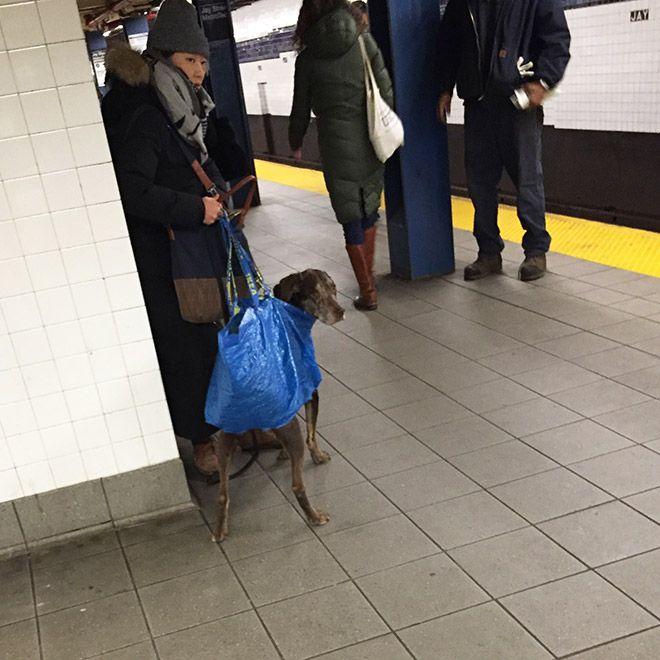 Как жители Нью-Йорка обходят запрет на собак в метро