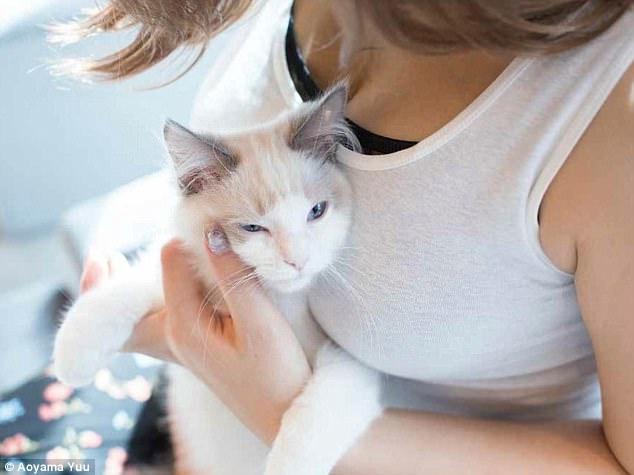 Котики и груди: эротический фотоальбом с терапевтическим эффектом