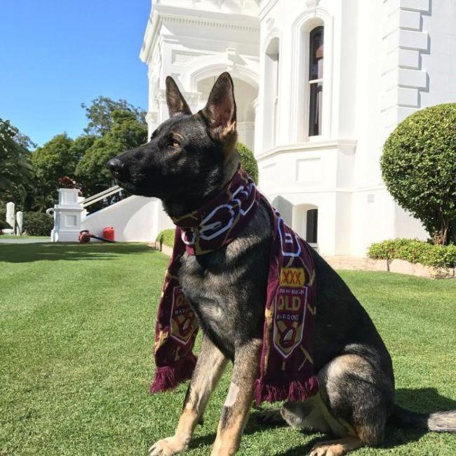 Слишком дружелюбную собаку исключили из полицейской академии