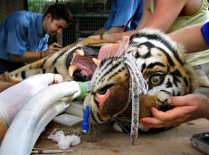 Животные на приеме у стоматолога