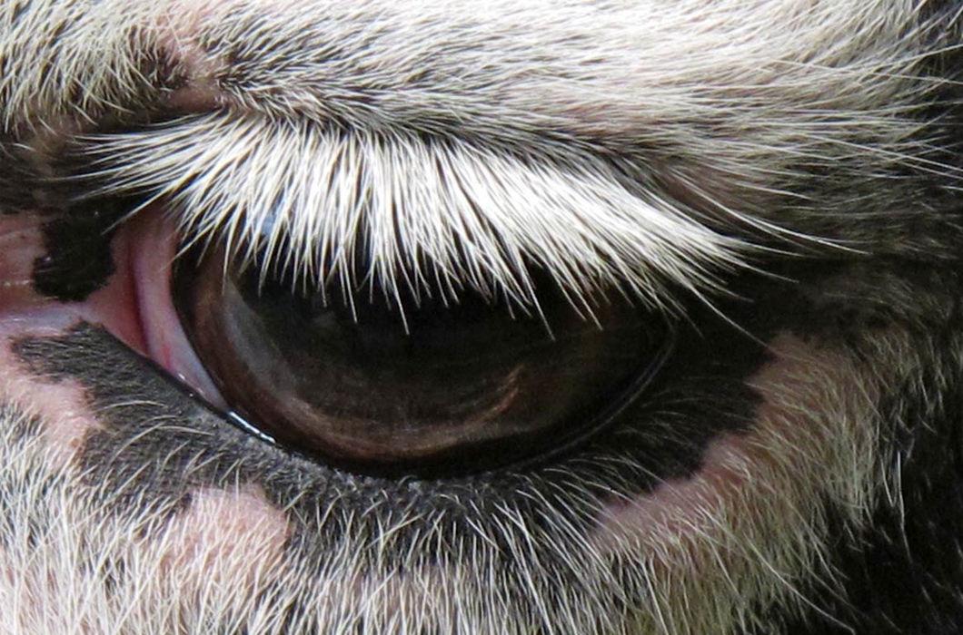 Ресницы у разных животных