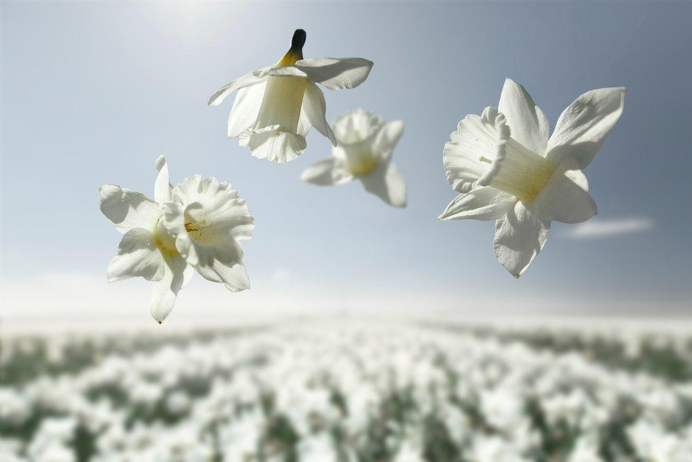 Цветы в невесомости от Клэр Дропперт