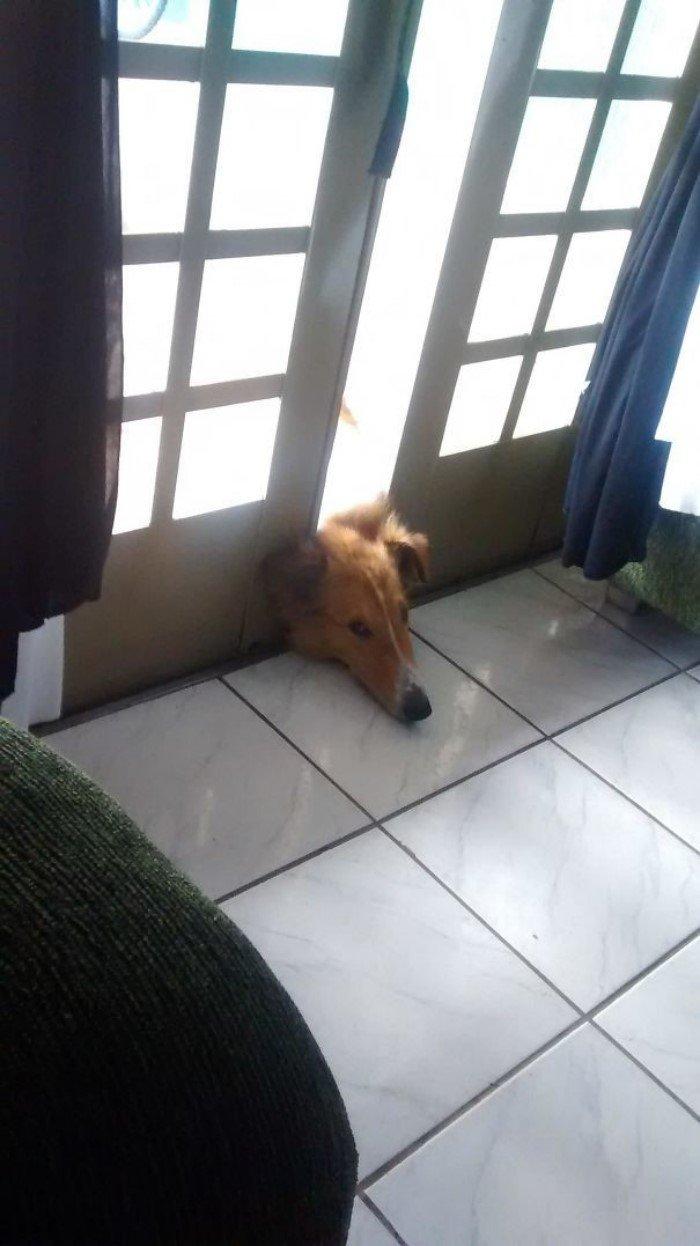 Забавные ситуации с собаками заряжают позитивом