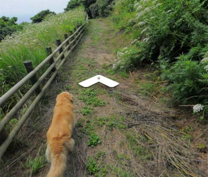 Заинтересовавшийся камерой пес попал на снимки Google Street View